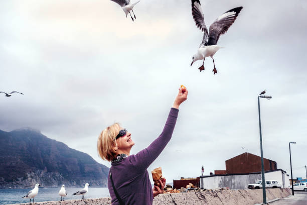 Feeding the seagulls at Hout Bay chips as the fly Hout Bay, South Africa - November, 23rd 2014: Smiling lady feeding chips to the seagulls at Hout Bay harbour, they pluck the chip from her hand. The fishing trawlers seen behind, going for repair and renovations. Seagulls flying all around. hout stock pictures, royalty-free photos & images