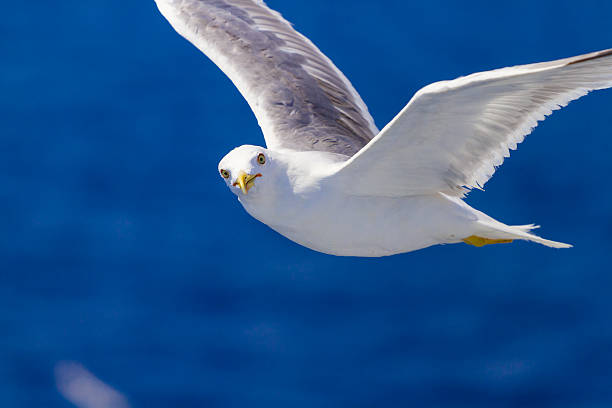 nourrir les mouettes du ferry, grèce - éther photos et images de collection