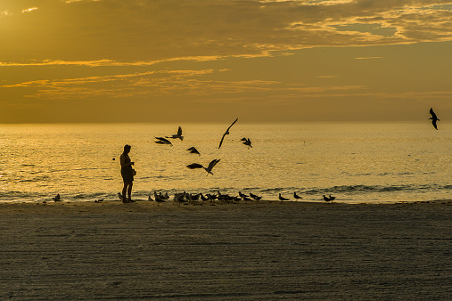 Feeding The Seagulls On The Beach At Evening Twilight Stock Photo - Download Image Now