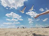 Feeding the seagulls on a beach