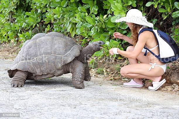 Feeding the turtles picture id475383434?b=1&k=6&m=475383434&s=612x612&h=uu2axbvjmgdt1qcouplnnk95crct ywiltbyeif2pba=