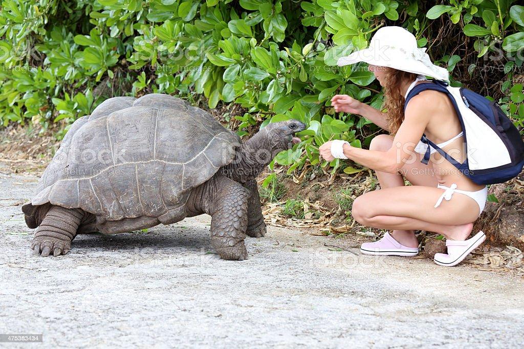 Feeding the turtles stock photo