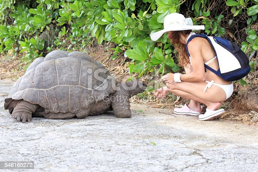 Attractive woman feeding the Seychelles Giant Tortoise on La Digue Island, Seychelles