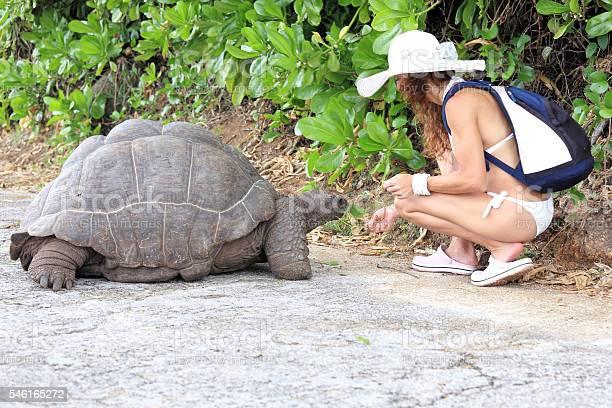 Feeding the turtles picture id546165272?b=1&k=6&m=546165272&s=612x612&h=pz1ltdb3uf4vjztd5icgng w8furvvnvlfm aqqr3h0=