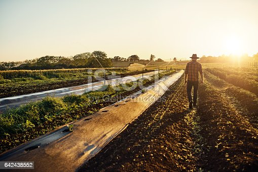 Shot of a young farmer walking between beds of herbs on his farm
