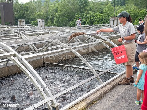 Branson, MO, UNITED STATES - June 2, 2018: View from the bottom of Table Rock Dam, 2018: Employee at fish farm feeds pellets to rainbow trout which will be stocked in Table Rock Lake
