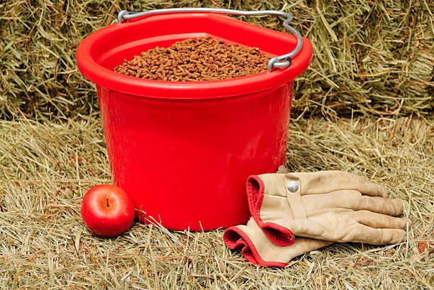 Feeding Time on the Farm stock photo