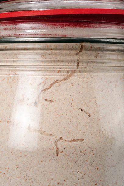 füttern spuren speisen motte - mehlmotten stock-fotos und bilder
