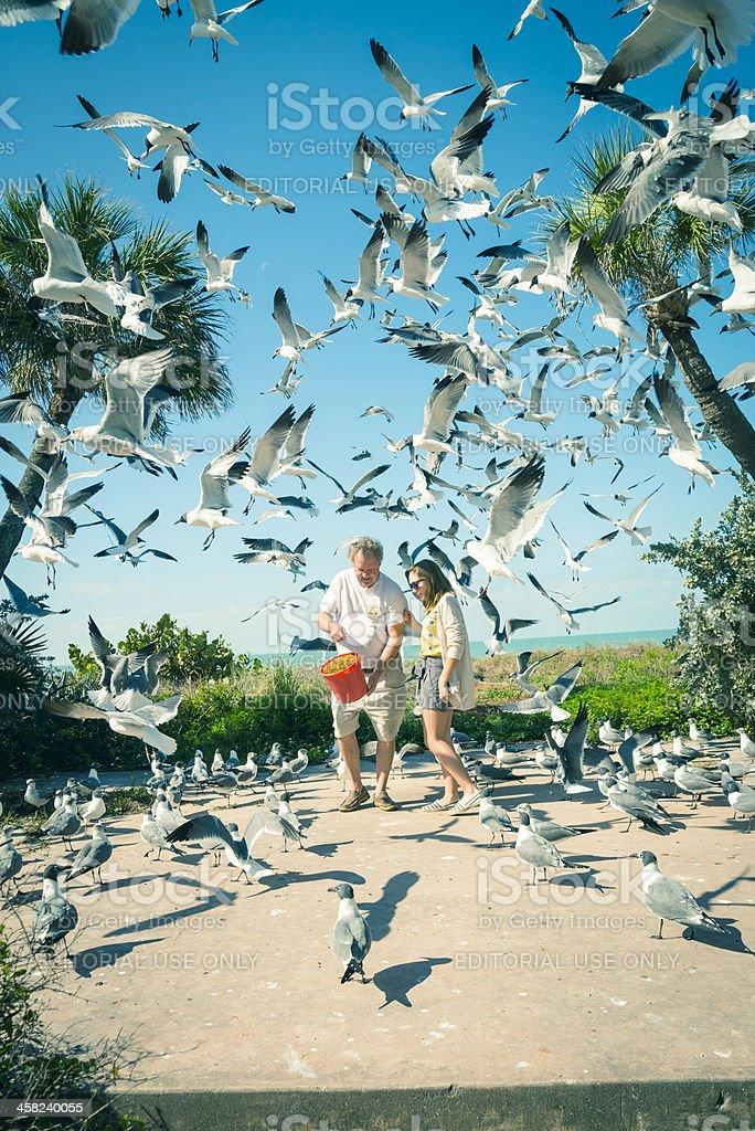 Feeding wild birds in the Suncoast Seabird Santuary. royalty-free stock photo