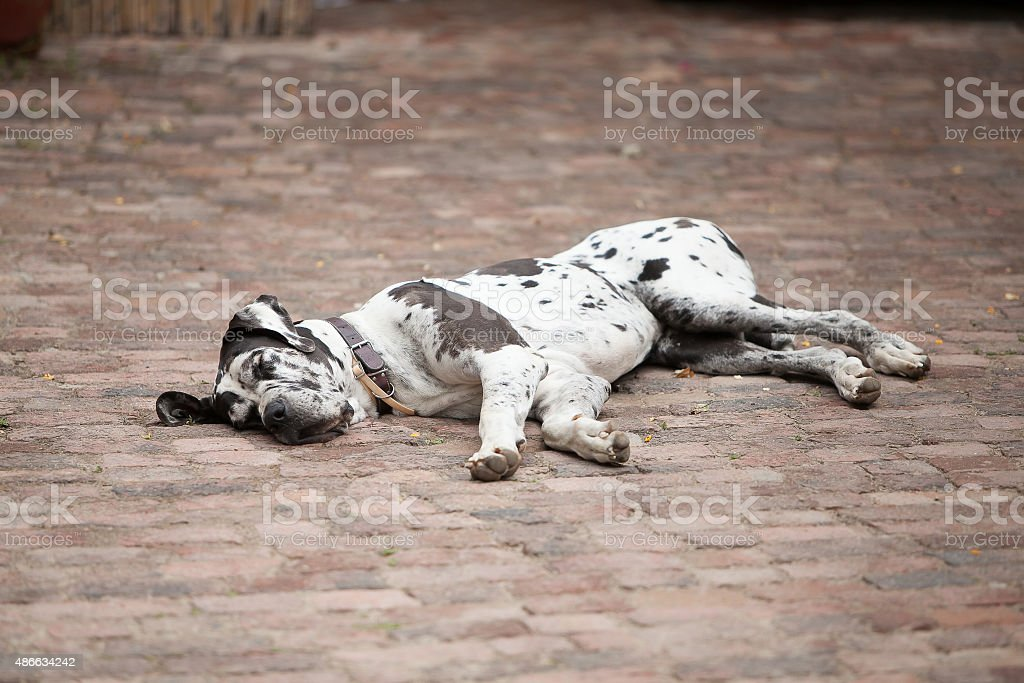 Feeling a wee bit tired stock photo