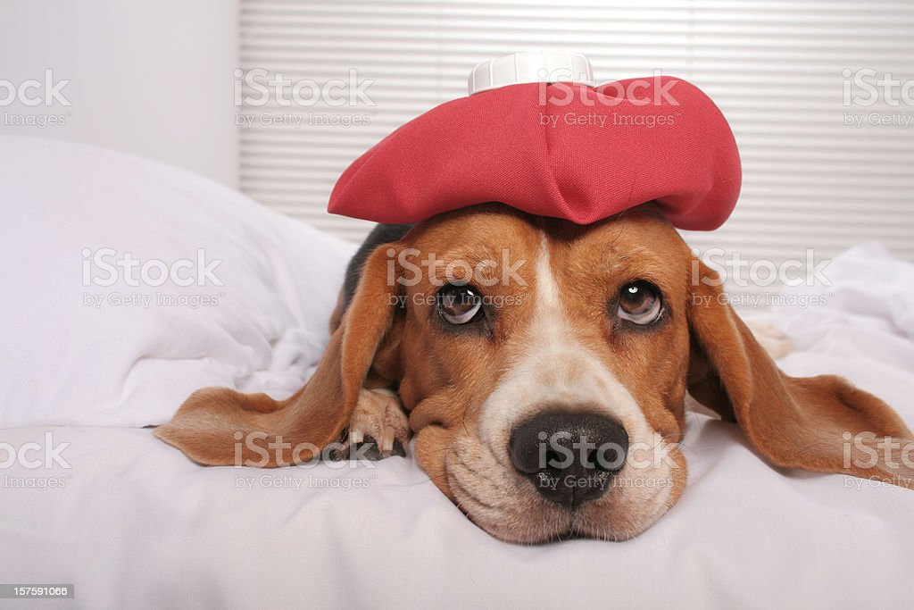 Feeling better stock photo