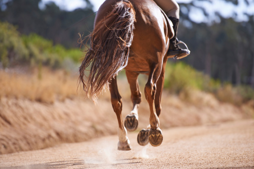Cropped view of a horse galloping with it's rider outdoors