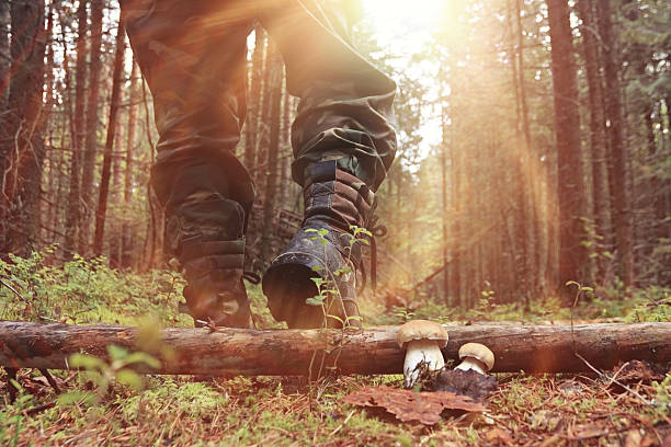 feet in shoes autumn forest hike feet in shoes autumn forest hike hunter stock pictures, royalty-free photos & images