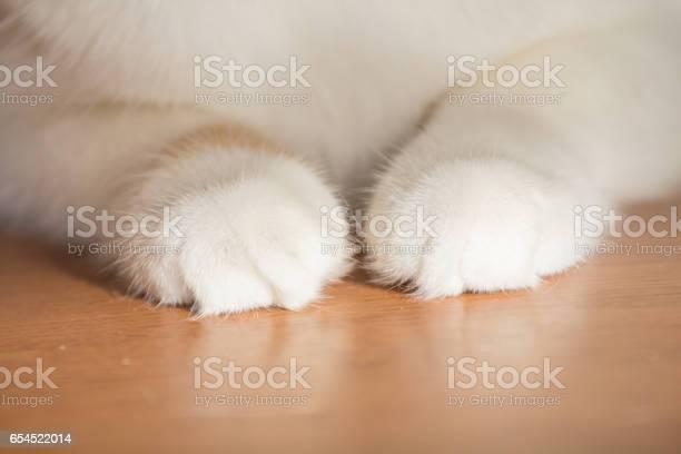 Feet of cat picture id654522014?b=1&k=6&m=654522014&s=612x612&h=9m9h51ayoh4qq5tt227j0r9uyfepkexe9xlo5j6ssnw=