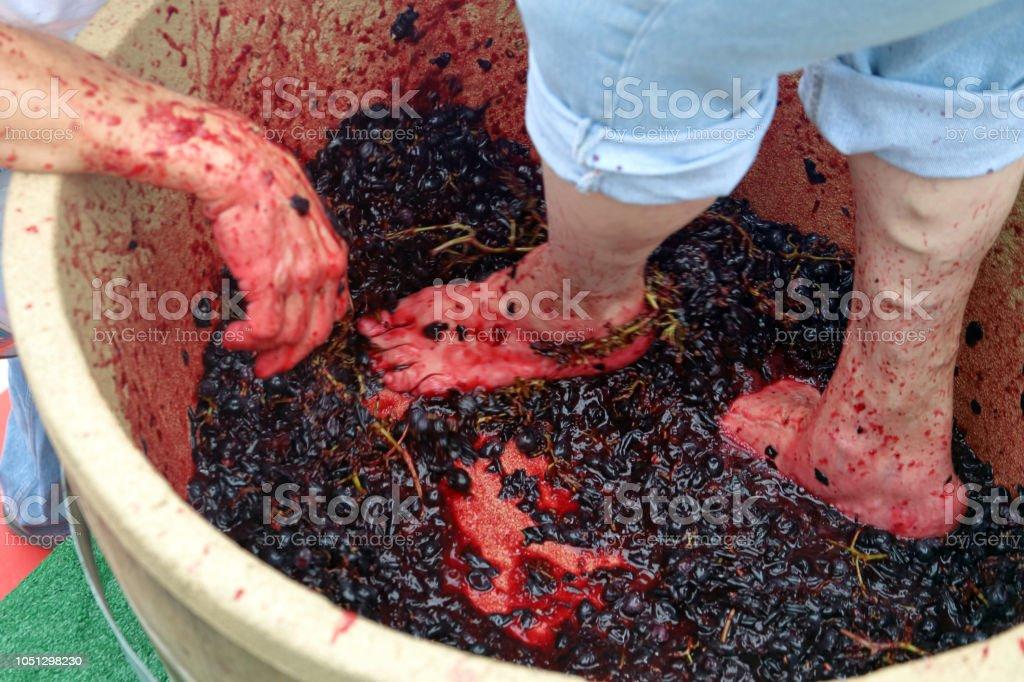 Feet stomping grapes in barrel - foto stock