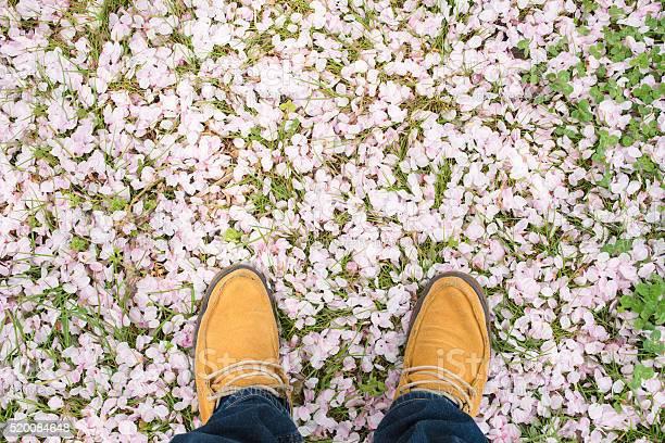 Feet stood amongst cherry blossom petals picture id520084648?b=1&k=6&m=520084648&s=612x612&h=uvgnvsafiicvjc2lu8e5wpdel1tvonugn6hm1bzgi3u=