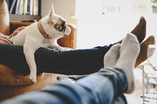 Personal perspective of dog resting on legs.