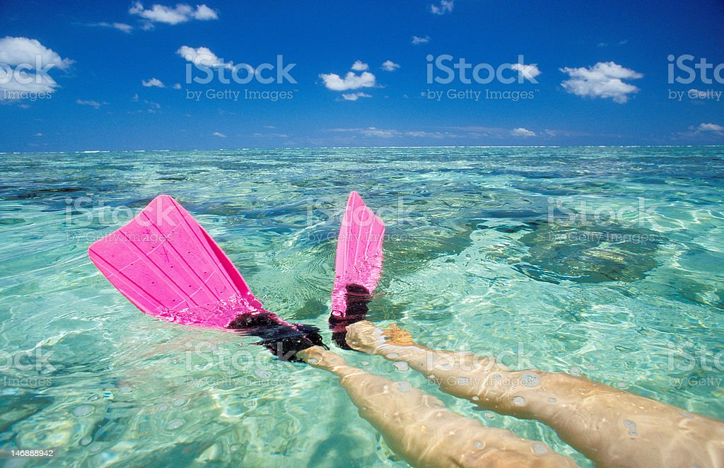 Feet with pink flippers at the Lady Elliot island stock photo