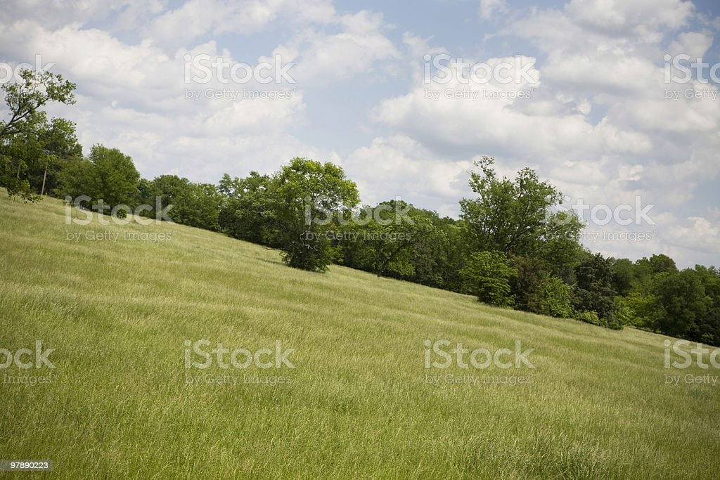 Feild of Grass with Trees, Blue Sky and Clouds royalty-free stock photo