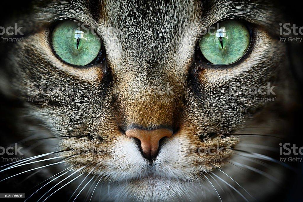 Feline stock photo