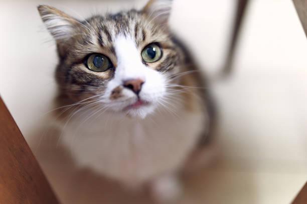 Feline picture id1148929399?b=1&k=6&m=1148929399&s=612x612&w=0&h=nxlpog9ol0f2wbhwjcof8f uqlzclzm9woxuq hjovy=