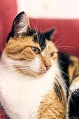 Living Room, Domestic Cat, Undomesticated Cat, Pets, Sleeping