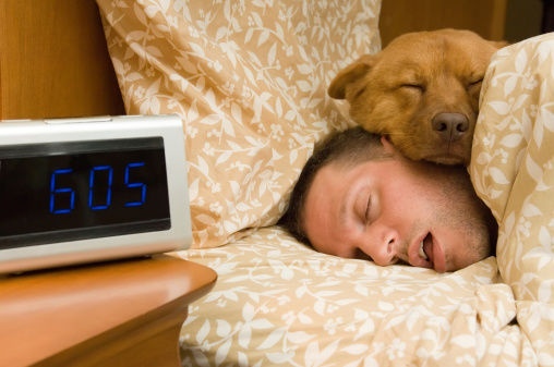 Fell Into Profound Sleep Stock Photo - Download Image Now
