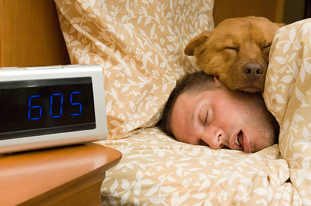 Fell into profound sleep Man and his dog comfortably sleeping in. mouth open stock pictures, royalty-free photos & images