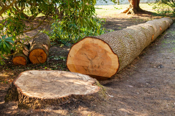 Felled, cut tree, with visible tree rings Felled, cut tree, with visible tree rings fallen tree stock pictures, royalty-free photos & images