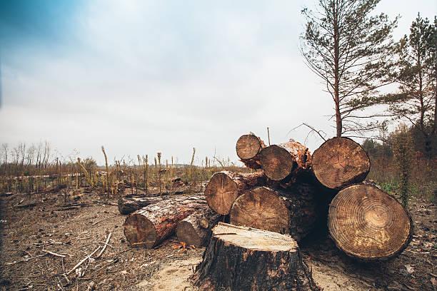 felled madera en el bosque - deforestacion fotografías e imágenes de stock
