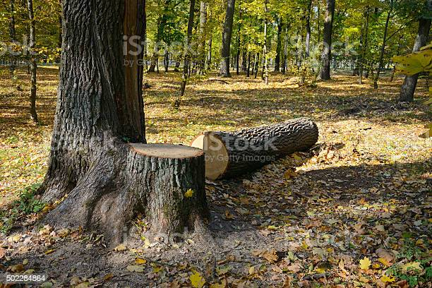 Photo of Felled tree in the forest