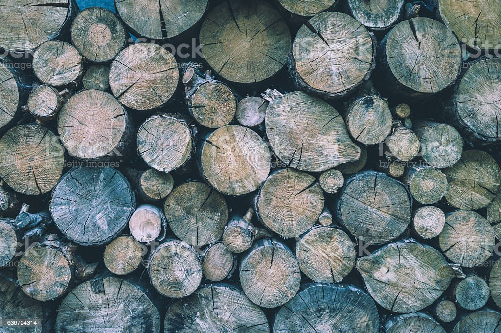 Felled wood. Wood texture stock photo