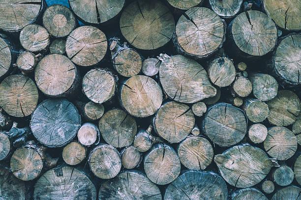 Felled wood. Wood texture - foto de acervo