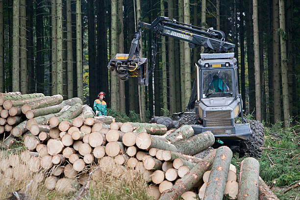 Feller buncher in forest Harvesting with forest machinery. Heavy feller buncher with chains in forest. lumberjack stock pictures, royalty-free photos & images