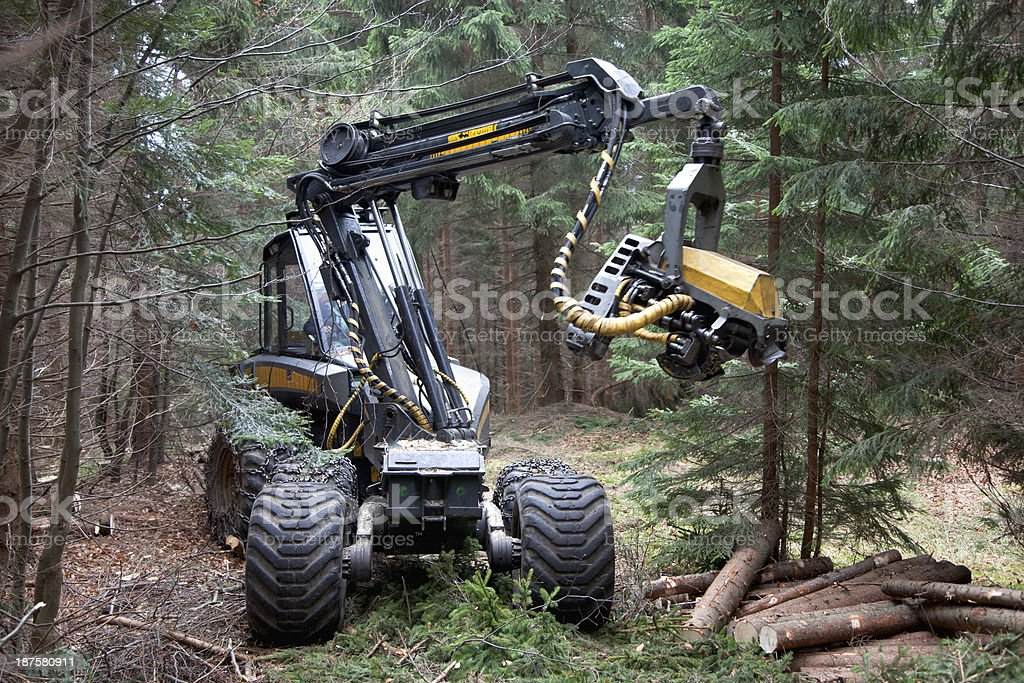 Feller buncher in forest stock photo