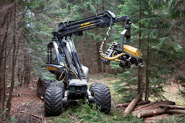 feller buncher in forest - logging equipment stock photos and pictures