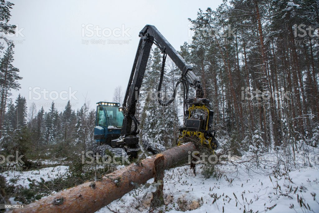 Feller buncher stock photo