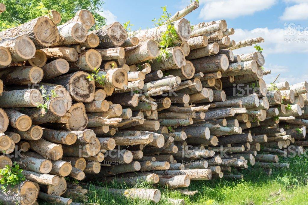 砍伐森林中的樹木 - 免版稅俄羅斯圖庫照片
