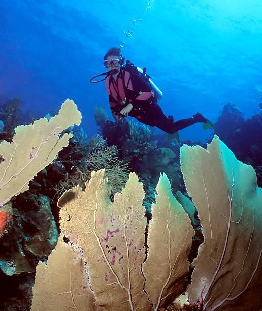 weiblicher taucher und-meer-fans - coral and mauve stock-fotos und bilder