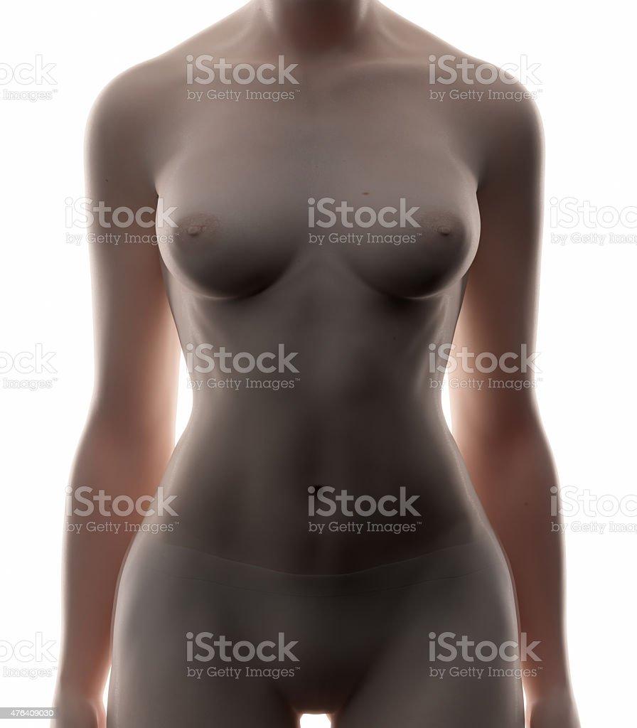 Female Abdomen Real View Female Anatomy Concept Stock Photo & More ...