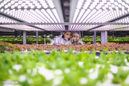 Female vertical farmers closely monitoring the growth of hydroponic lettuce crops beneath LED lighting.