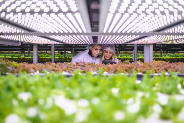 female agri-tech specialists examining led lit lettuce crops - comida sustentavel imagens e fotografias de stock