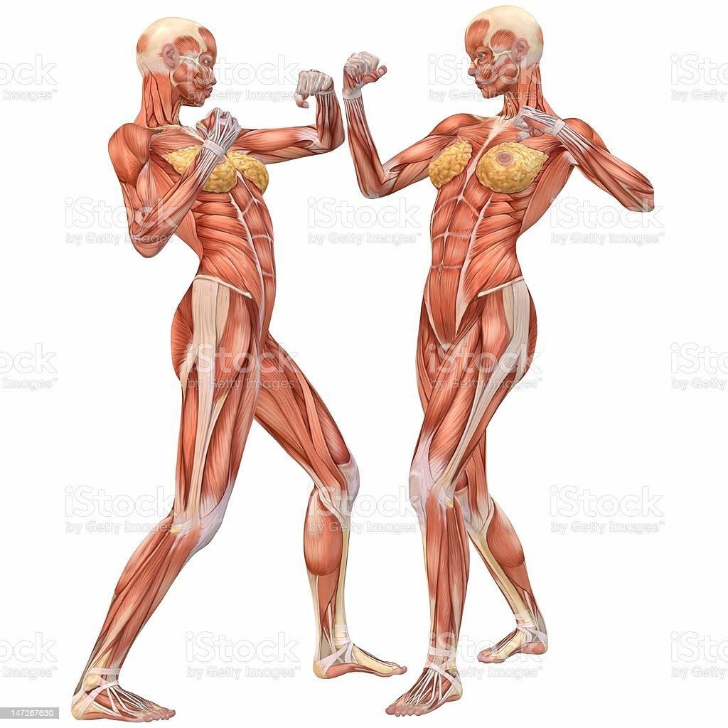 Female Anatomy Body Fighting Stock Photo & More Pictures of Anatomy ...