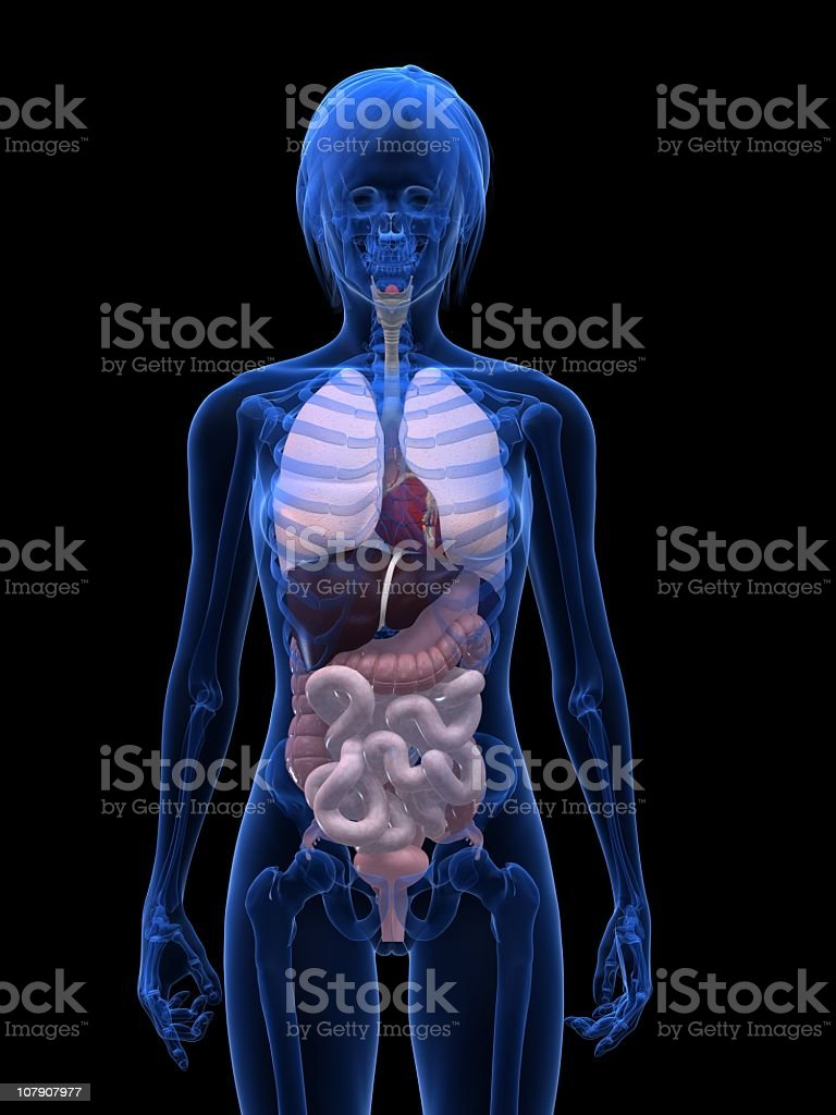 Female anatomy royalty-free stock photo