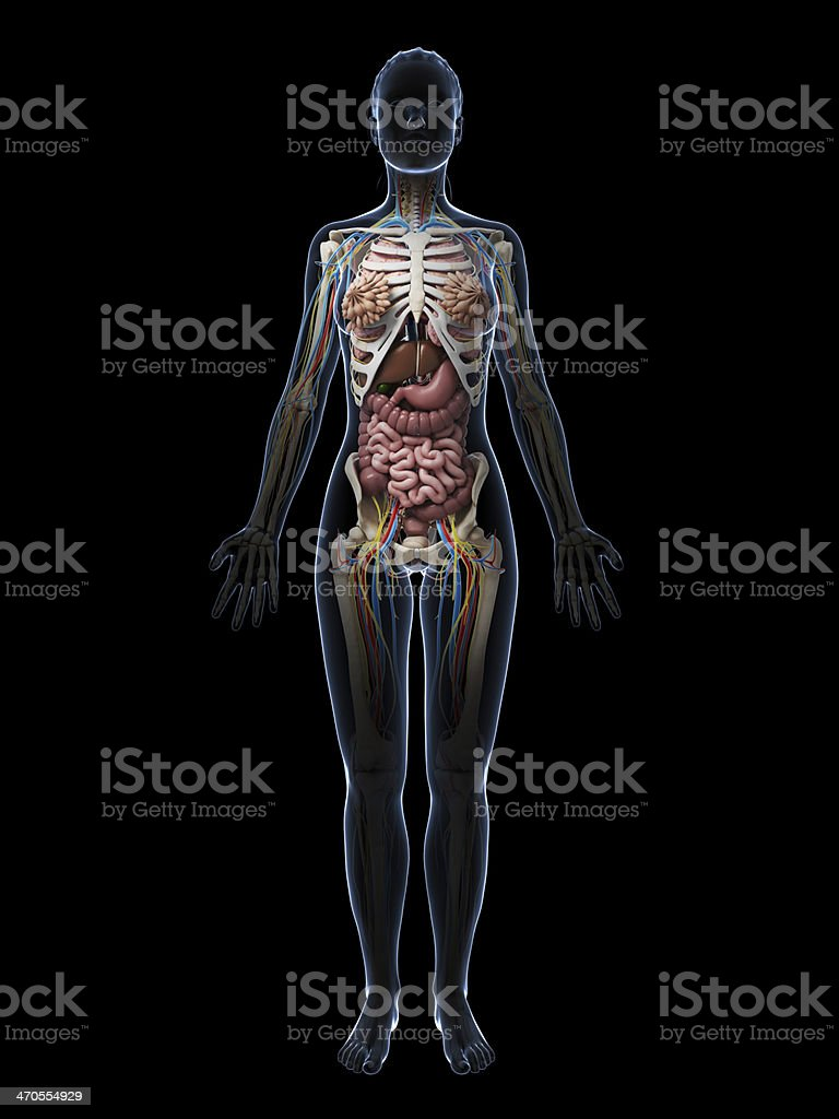 Female Anatomy Stock Photo Istock