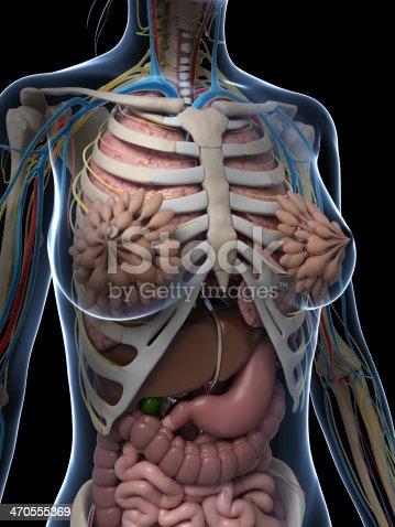 Weibliche Anatomie Stock-Fotografie und mehr Bilder von Anatomie ...
