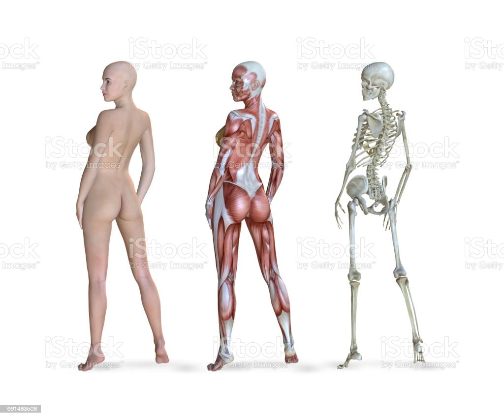 Female Anatomy Views Stock Photo More Pictures Of Anatomy Istock