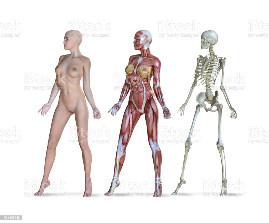 Female Anatomy Views Stock Photo More Pictures Of Istock Human Diagram Body Royalty Free