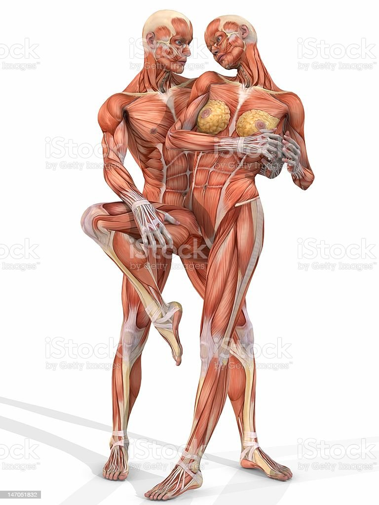 Hembra Y Macho Con Cuerpo De Anatomía Pareja - Fotografía de stock y ...