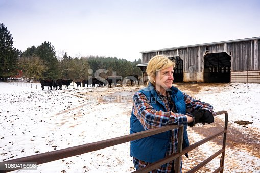 A female beef cattle rancher with a herd of Wagyu or Wagu Japanese Black cattle in the winter.  Wagyu beef is highly regarded as well marbled, gourmet quality beef.